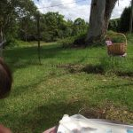 Getting creative with Paperbark….