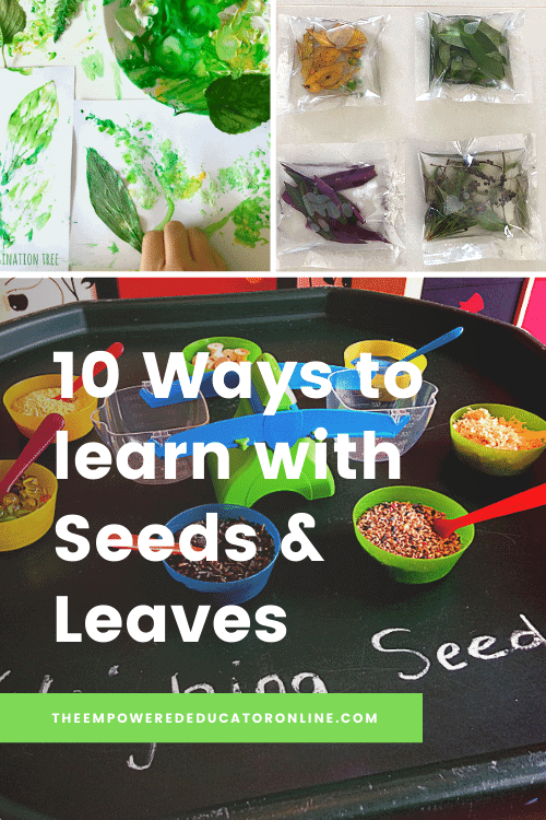 Create opportunities for engagement and active learning with leaves and seeds when you try one of the activities in this collection!