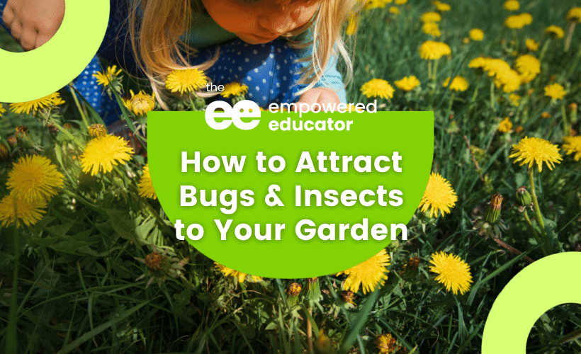 how to attract insects to your garden