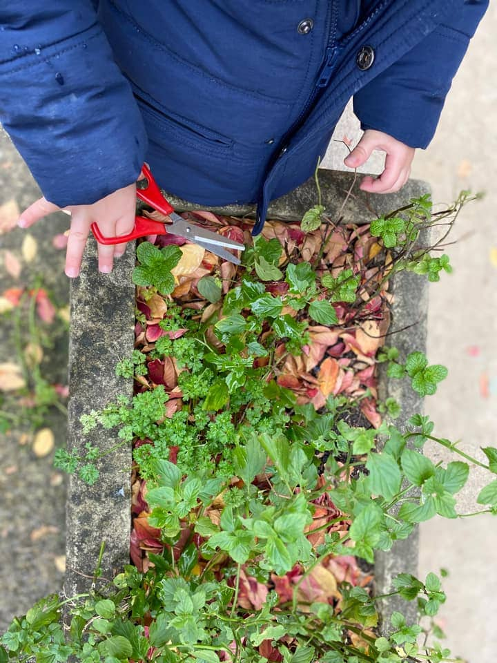 herb cutting early learning activity fine motor